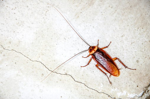 istock Close up cockroach 186302555