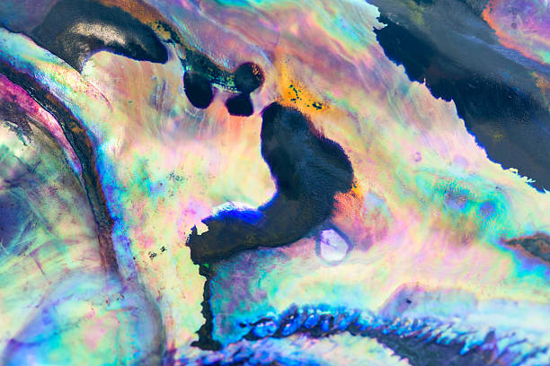 close up colorful background of abalone shell, haliotis - mother of pearl stock photos and pictures