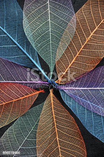 istock Close up Colorful Dried Leaves 856519464