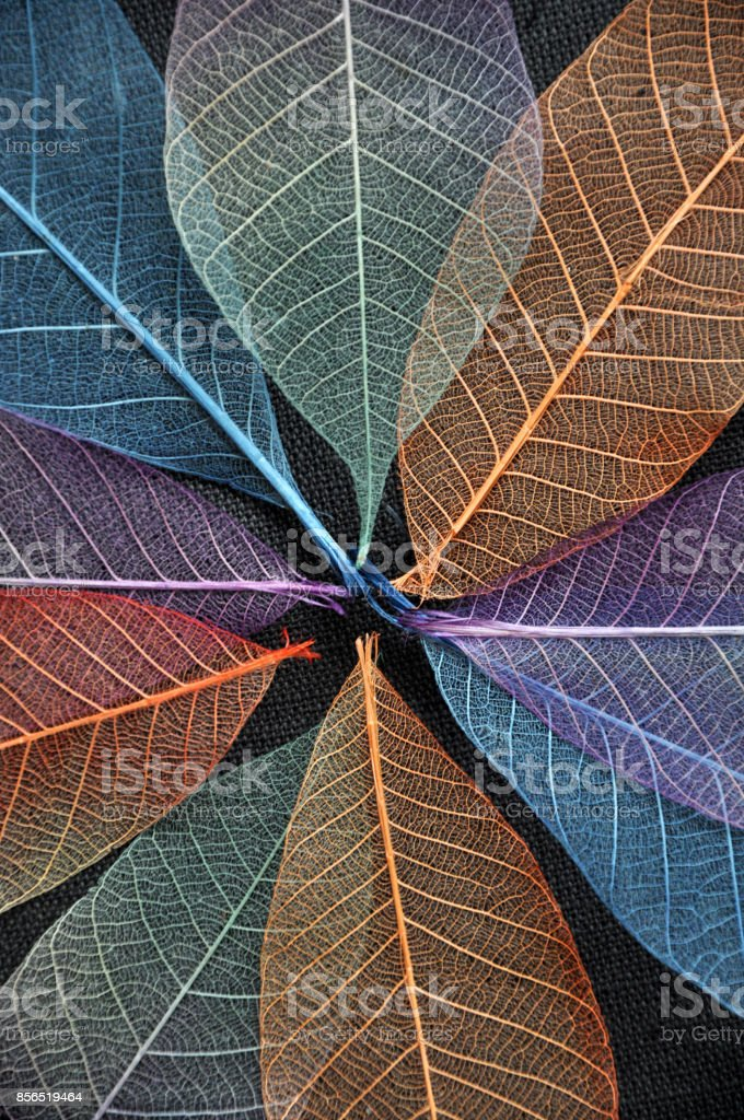 Close up Colorful Dried Leaves stock photo