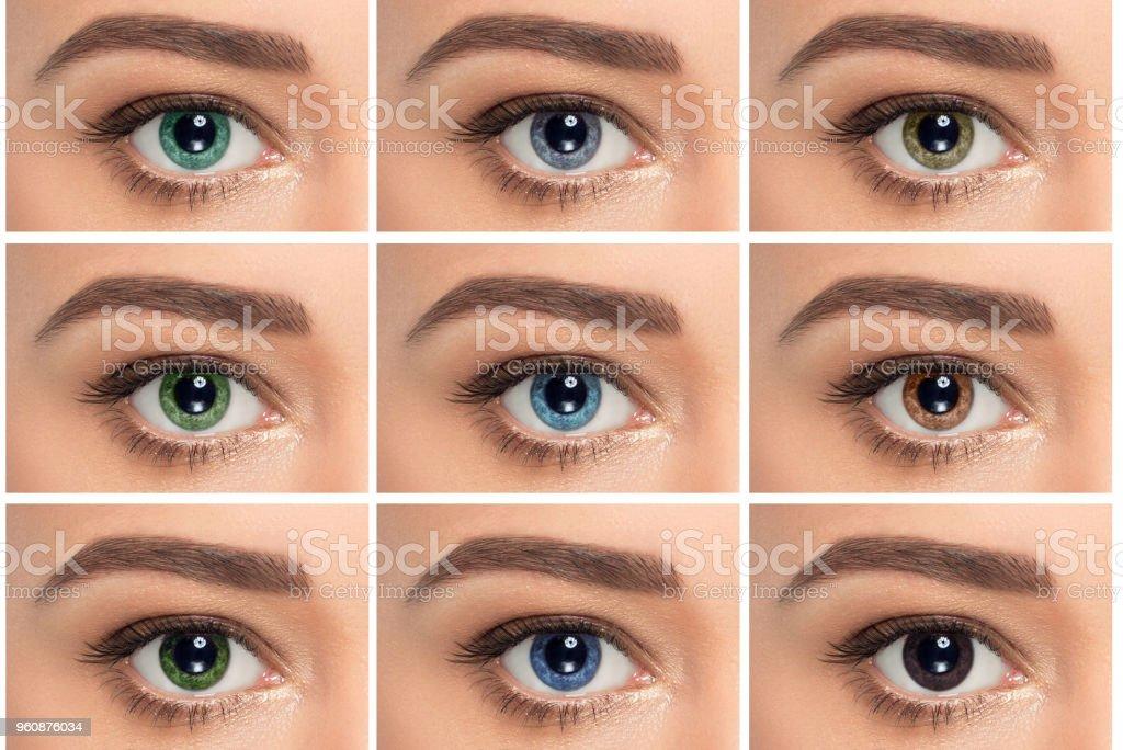 Großaufnahme, zusammengesetzte Augen mit unterschiedlicher Farbe – Foto