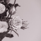 Close up contrast white roses bouquet on light background. Copy space