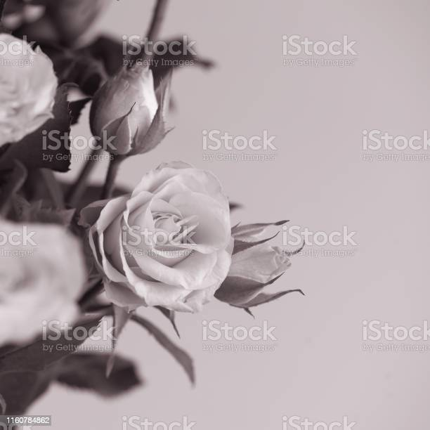 Close up contrast white roses bouquet on light background monohrome picture id1160784862?b=1&k=6&m=1160784862&s=612x612&h=rqoeuw62ijzcxf ergtu9ox12pwreb1oblstw99o c4=