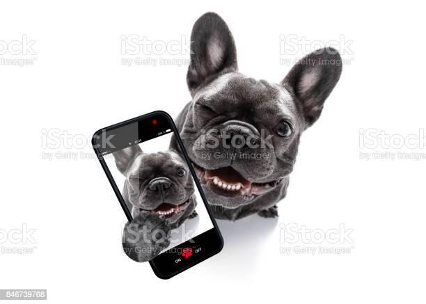 Close up curious dog looks up picture id846739768?b=1&k=6&m=846739768&s=612x612&h=ljxcmg m etqexvwvx7bdm 22gjhxkktgmaaq nfy2y=