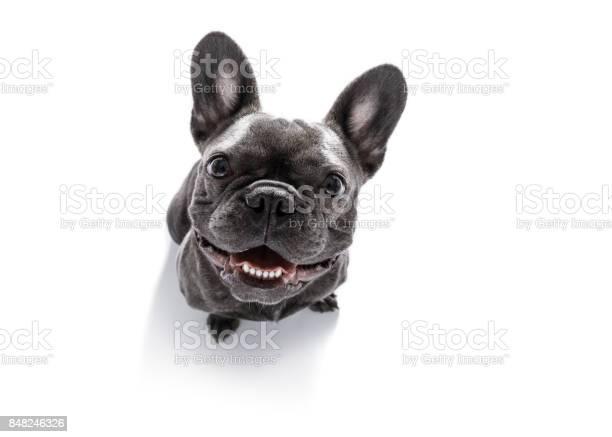 Close up curious dog looks up picture id848246326?b=1&k=6&m=848246326&s=612x612&h=ijcpucuodyru2pkpe2vv1lqf4u3wzzb7joyarzltsvy=