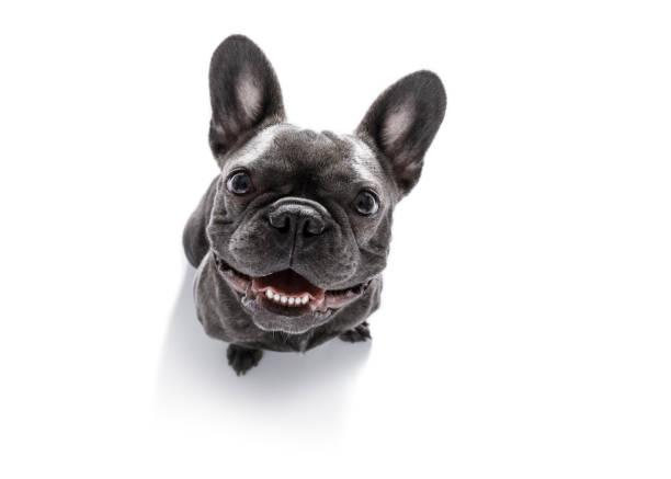 nahaufnahme der neugierige hund sucht - glückliche welpen stock-fotos und bilder