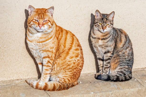 Close up cute friends cat in nature picture id1201581566?b=1&k=6&m=1201581566&s=612x612&w=0&h=5hoeoy9dx6dvoiptj   8tahnpjeg sluumghmf2khy=