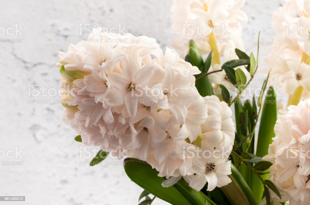 Close Up detail of a white Hyacinth stock photo