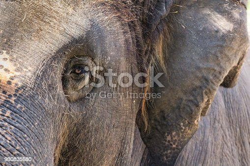 istock close up elephant 930835680