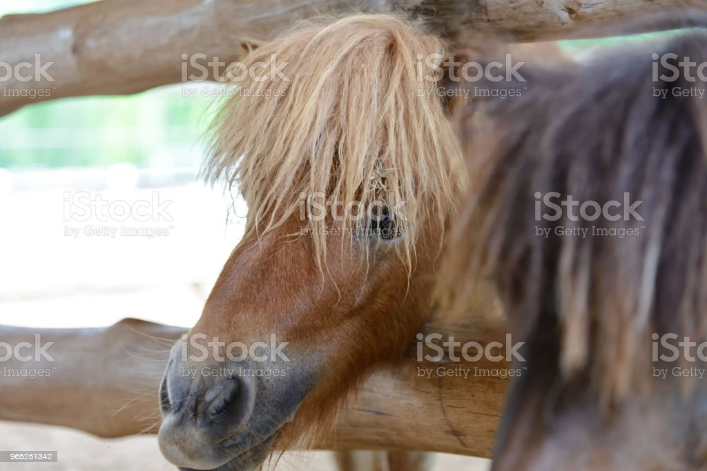 close up eye of horse royalty-free stock photo