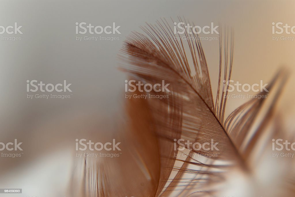 Close Up Feather royalty-free stock photo
