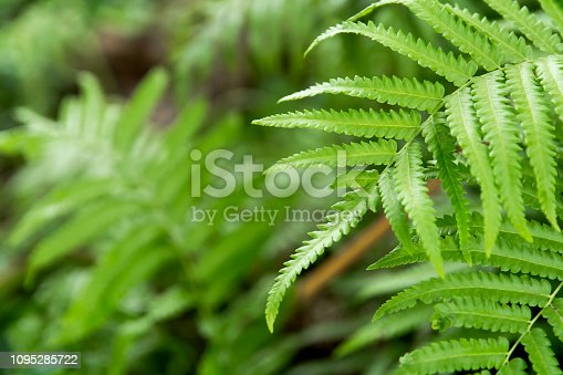 istock Close up ferns leaves green background 1095285722