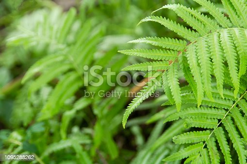 istock Close up ferns leaves green background 1095288262