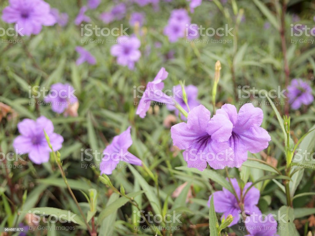 close up flower in the garden royalty-free stock photo