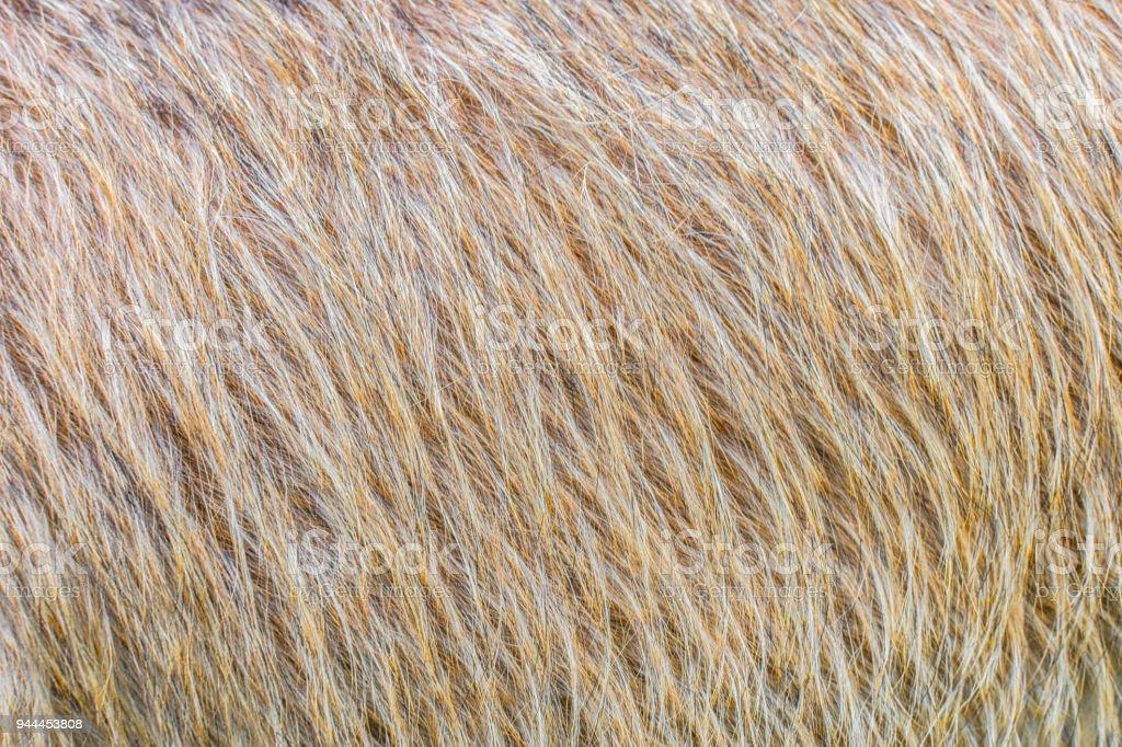 Close up fluffy hair skin of dog. stock photo