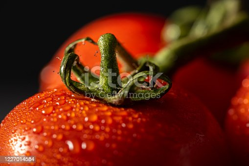 Close Up Fresh Tomatoes with Drops Of Dew isolated black background