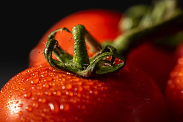 Close Up Frische Tomaten mit Drops Of Dew isoliert schwarzen Hintergrund – Foto