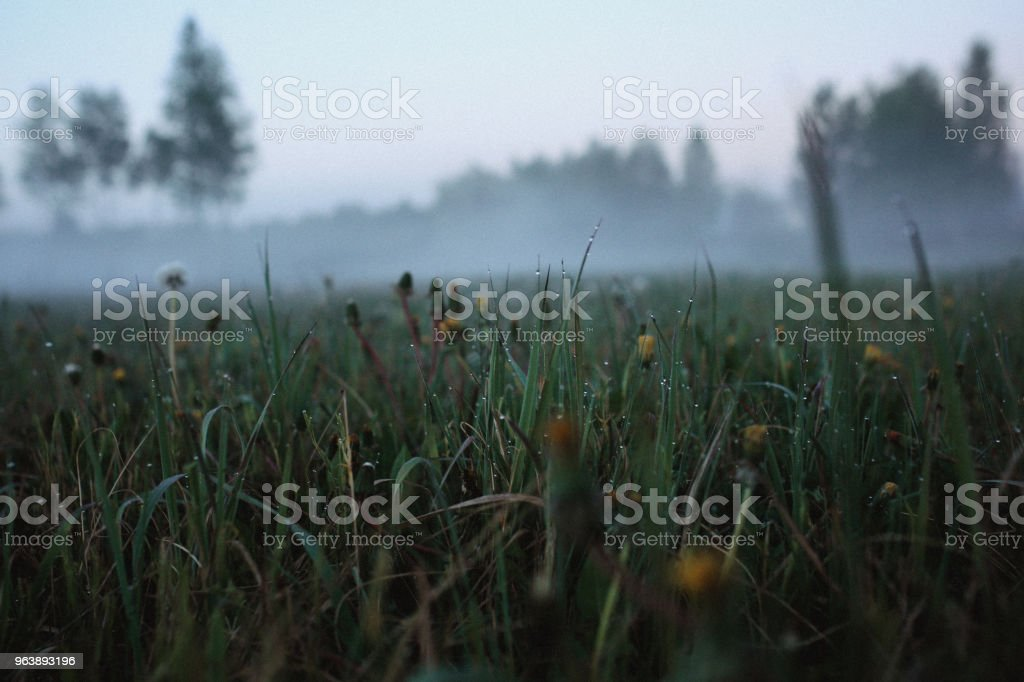 Close up grass. Fog in park in the city. Early Morning. Film Grain toning - Royalty-free Architecture Stock Photo