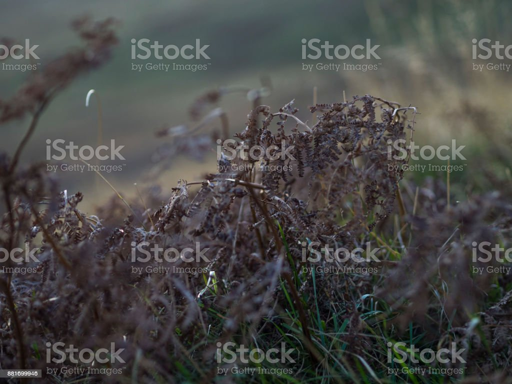 Close up Grass stock photo