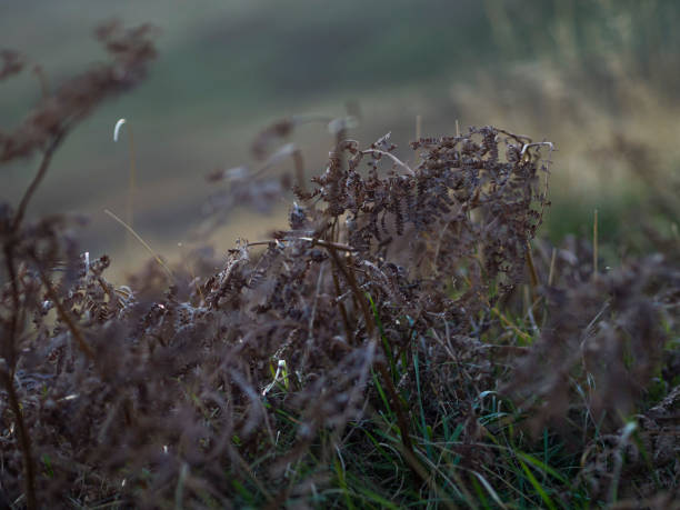 Close up Grass stock photo