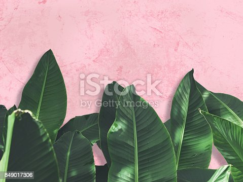 istock Close up green banana leaves over pink painted grunge concrete wall. 849017306