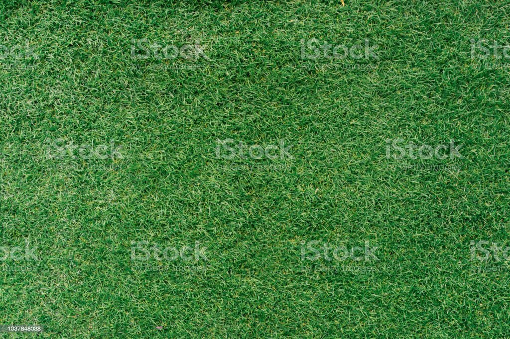 close up green field grass natural floor background texture for design stock photo