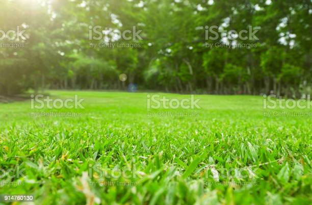 Close up green grass field with tree blur park backgroundspring and picture id914760130?b=1&k=6&m=914760130&s=612x612&h=sxgxbcxsmhkwmcrprwilaerqfh7qxvyrkizfbhtvt i=