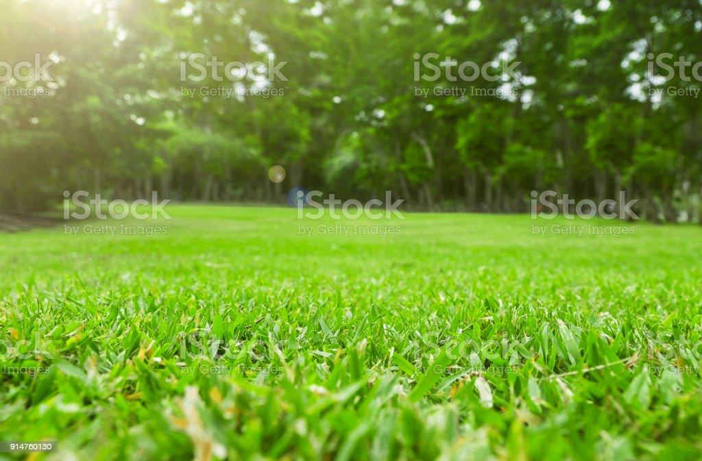 Nahaufnahme der grünen Wiese mit Baum verwischen Park Hintergrund, Frühling und Sommer-Konzept – Foto