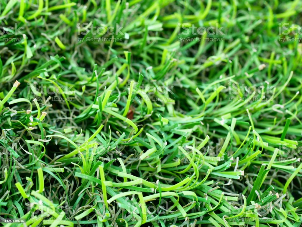 Lawn, Backgrounds, Putting Green, Abstract Backgrounds, Natural green
