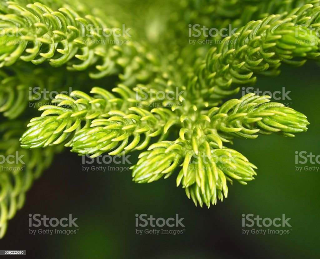 Close up : Green leaf background foto royalty-free