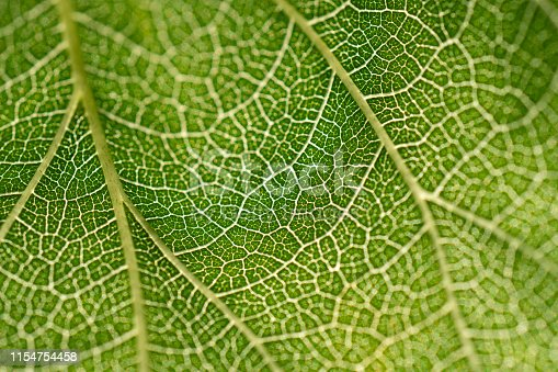 istock close up green leaf texture 1154754458