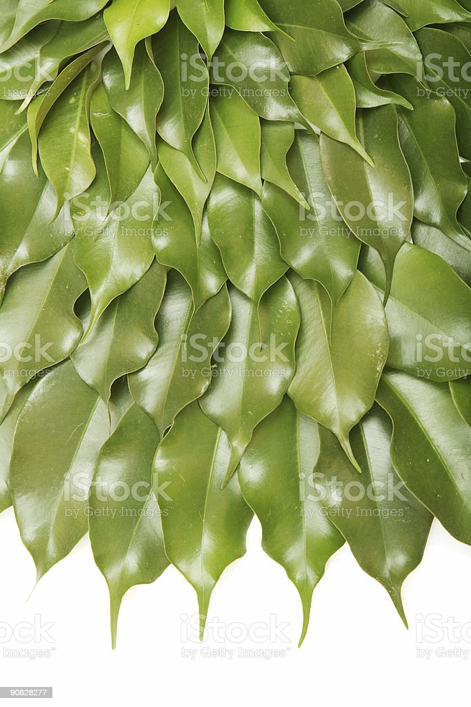 Close up green leaves royalty-free stock photo