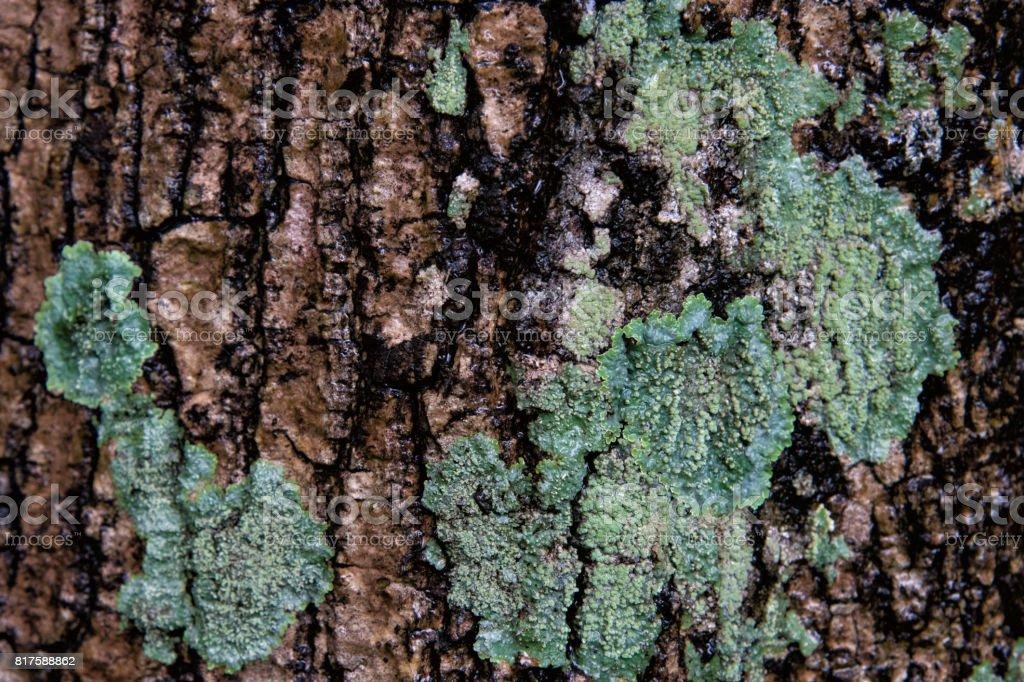 Close-up groen vergelijken textuur oppervlak de schors van de selectieve aandacht van boom foto