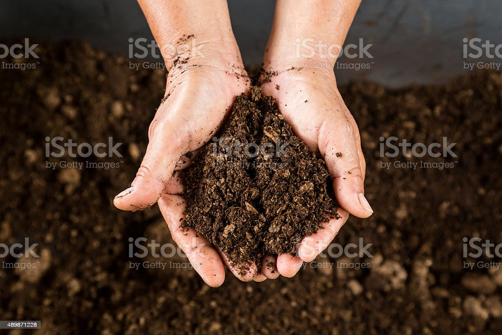 close up hand holding soil peat moss stock photo