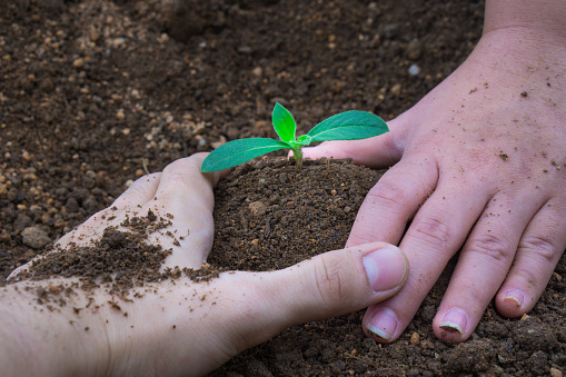 486530452 istock photo Close up hands planting tree together into the soil. Earth day. World environment day. Ozone day. 1172636121