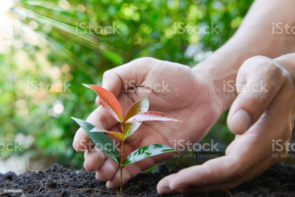 Close up human hand is planting the plant to the ground with lay of sunlight stock photo