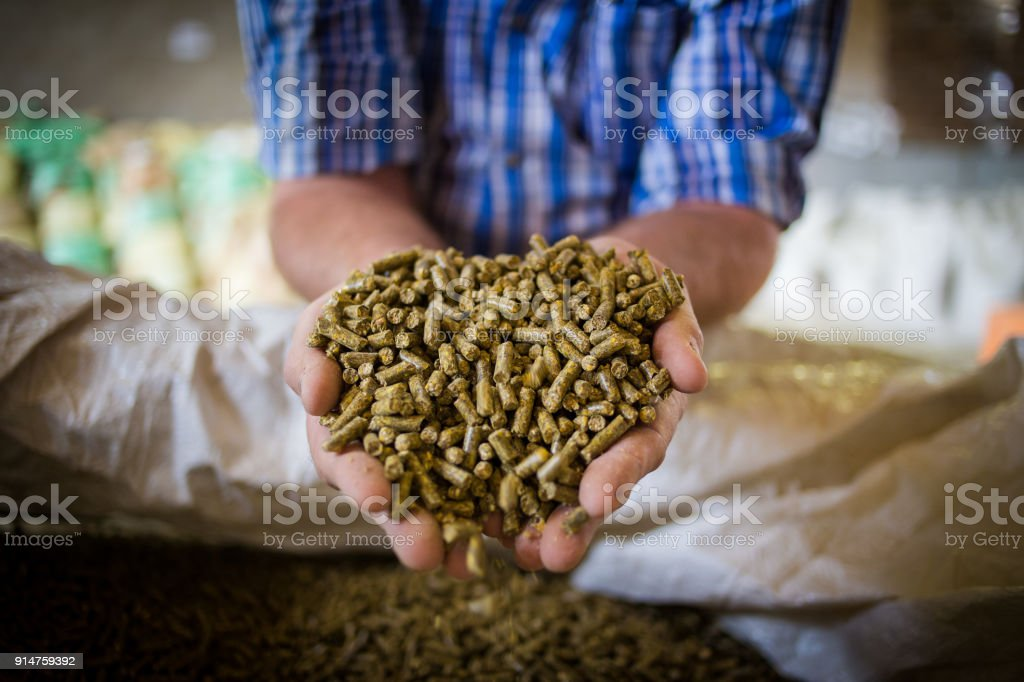 Close up image of hands holding animal feed at a stock yard stock photo