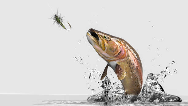 Close up image of rainbow Trout jumping out of water. White background with water splash ad lure bait Close up image of rainbow Trout jumping out of water. White background with water splash ad lure bait fishing line stock pictures, royalty-free photos & images
