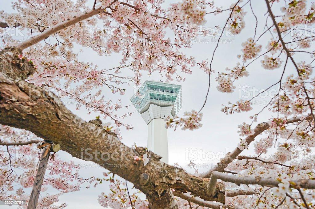 Close up in Goryokaku Tower in Cherry Blossom Season, Japan. royalty-free stock photo