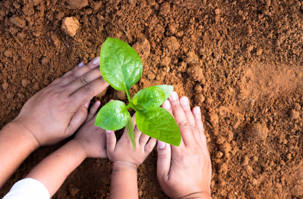 Close up Kid hand and father planting young tree stock photo