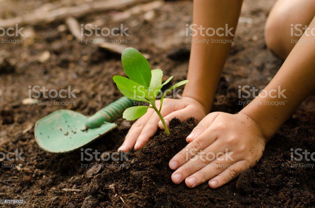 Fermer la main Kid plantation de jeunes arbres - Photo