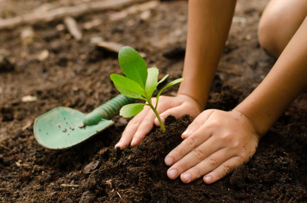 close up kid hand planting young tree - formal garden stock photos and pictures
