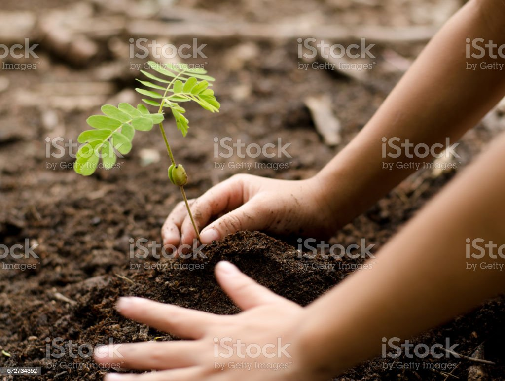 Nahaufnahme Kind Hand jungen Baum Pflanzen - Lizenzfrei Baum Stock-Foto
