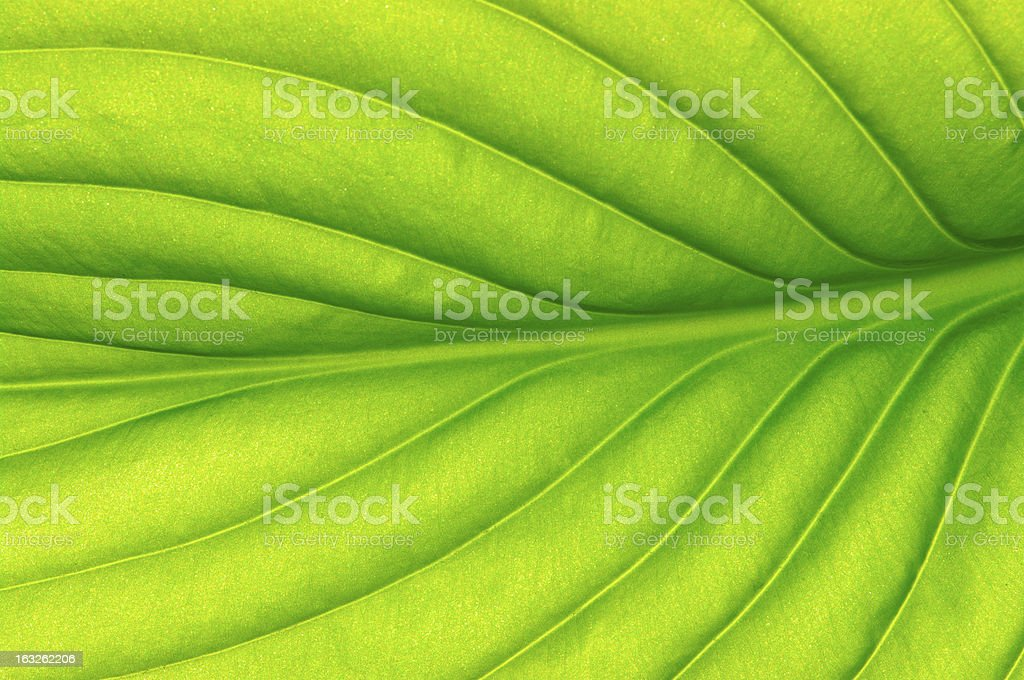 close up leaf royalty-free stock photo