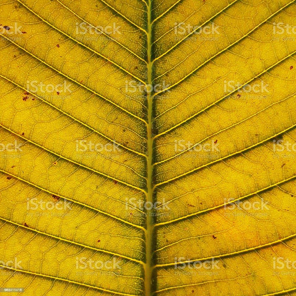 zbliżenie tekstury liścia - Zbiór zdjęć royalty-free (Asymetria)