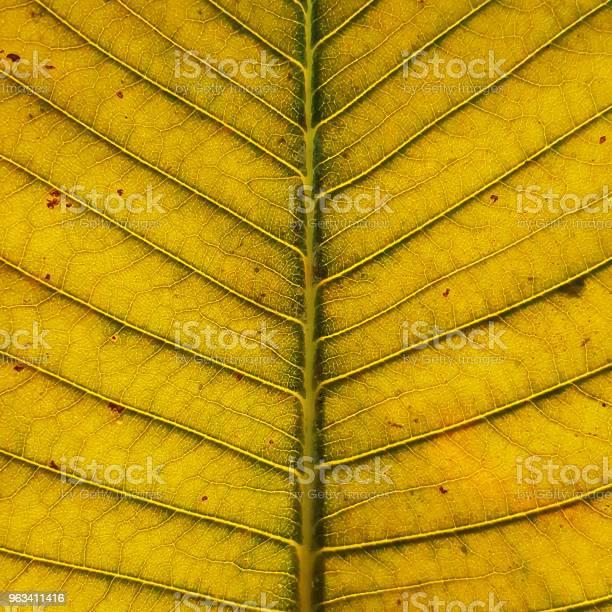 Zbliżenie Tekstury Liścia - zdjęcia stockowe i więcej obrazów Asymetria