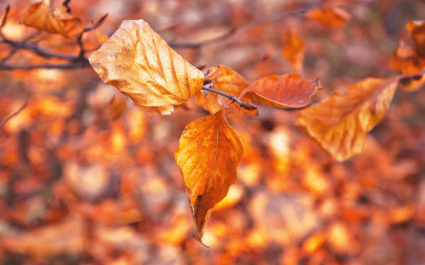 Close Up Leaves in Autumn stock photo