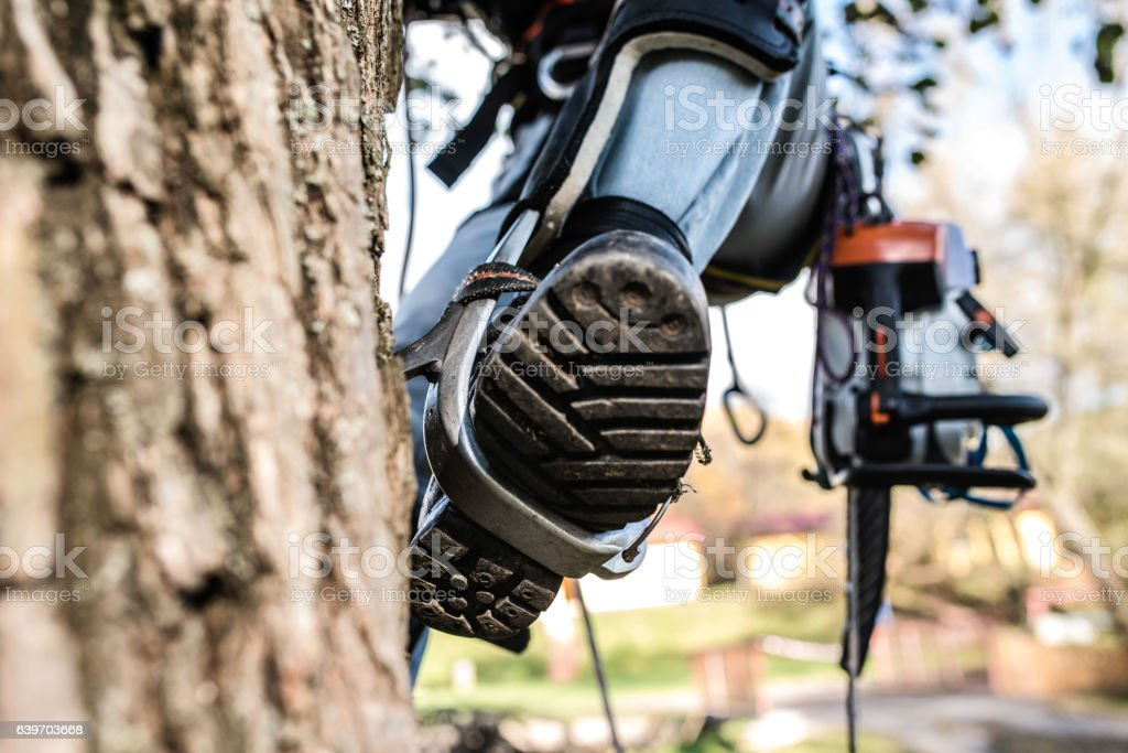 Close up. Leg of lumberjack with a chainsaw climbing tree. stock photo