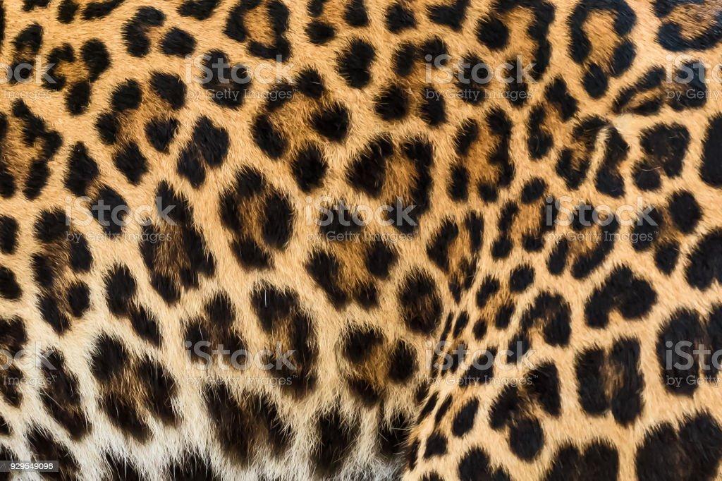 Close up leopard fur background. stock photo