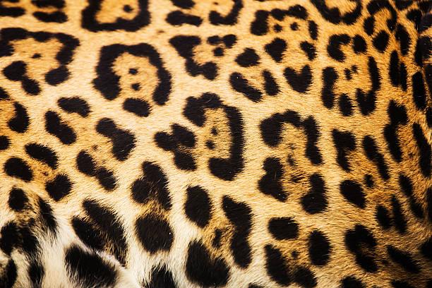 Close up leopard spot pattern texture background Close up leopard spot pattern texture background jaguar cat stock pictures, royalty-free photos & images